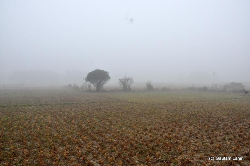 Gn brown dry fields at Bosipota by Gautam Lahiri