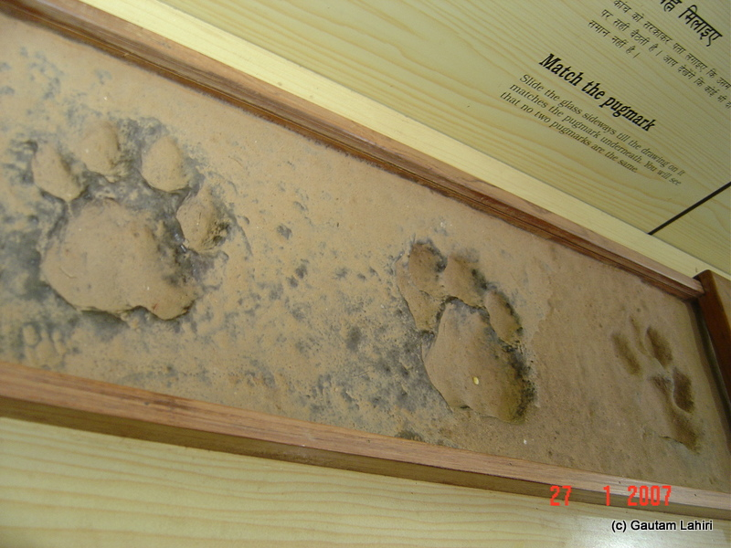 Encapsulated real pug marks were kept on display. The only give way to a tiger's presence in Kanha forest by Gautam Lahiri