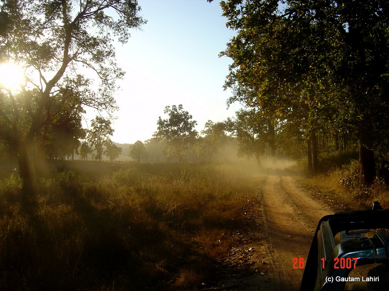 Whipped up dust from the tires formed a creamy haze catching the morning mist. The sun took out its brush to paint the forest at will in Kanha forest by Gautam Lahiri