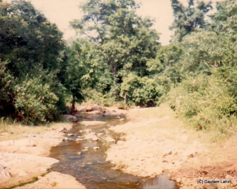 The near dry stream in the Betla forest reserve, Jharkhand, India by Gautam Lahiri