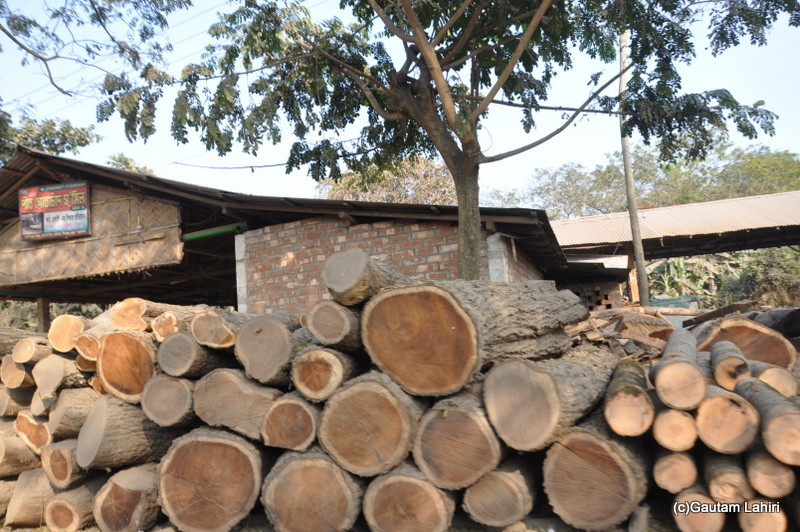 Illegally cut tree trunks at Chandraketugarh, taken by Gautam Lahiri