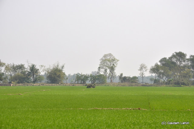 Green rice fields passed by on either side near Gadiara river bank beside the mighty Rupnarayan in Hooghly, West Bengal, India by Gautam Lahiri