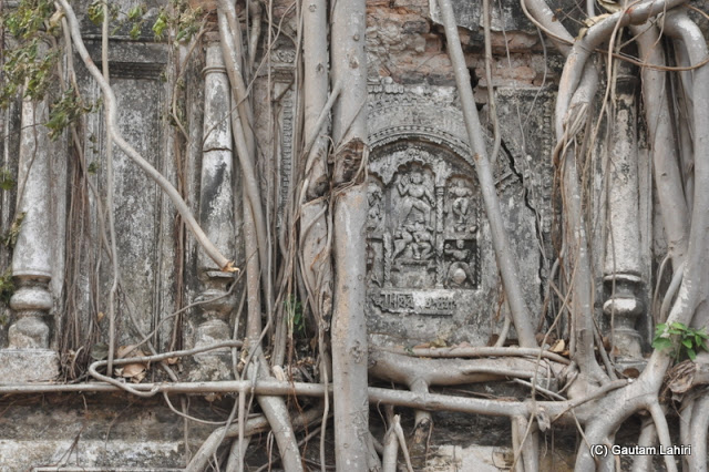 Tree roots, branches, and the old wall entwined each other in a gridlock at Taki, West Bengal, India by Gautam Lahiri