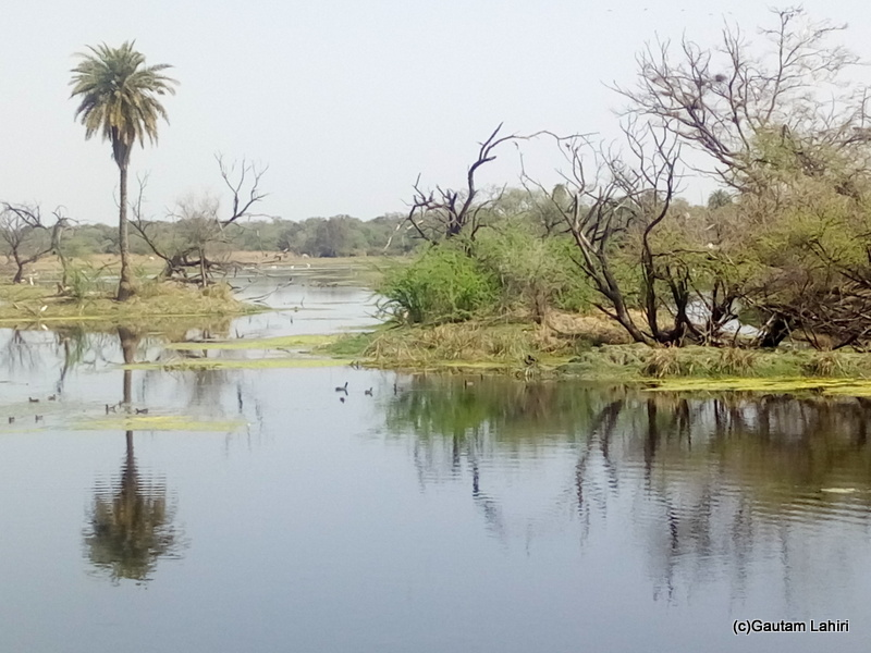 Swampy grasslands and lake meet at Keoladeo Sanctuary, Bharatpur Rajasthan taken by Gautam Lahiri