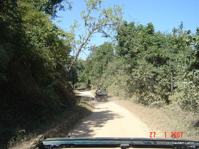The forests closed inwards over the narrow road as we relentlessly drove through the Kanha forest's amazing woods by Gautam Lahiri
