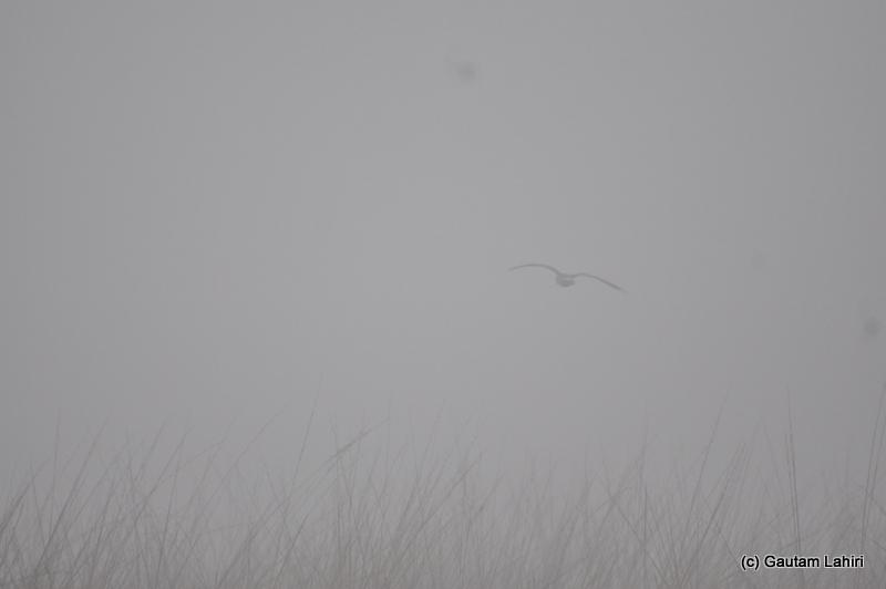 Birds flying into the mist at Bosipota by Gautam Lahiri