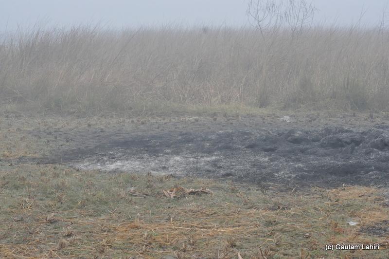 Burned hay lay cold at Bosipota by Gautam Lahiri