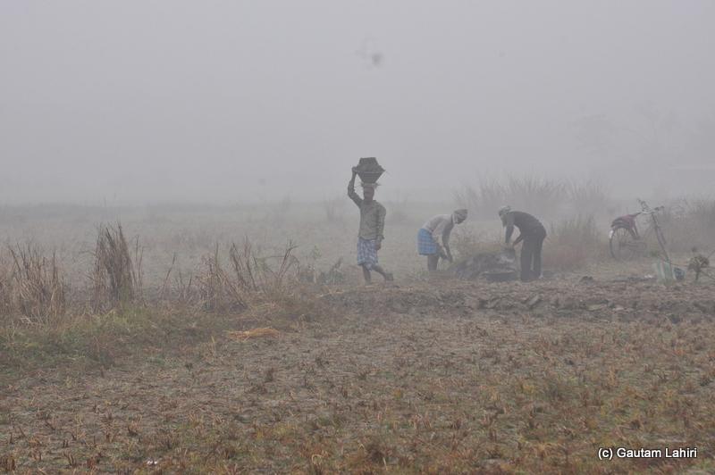 Early morning field work at Bosipota by Gautam Lahiri