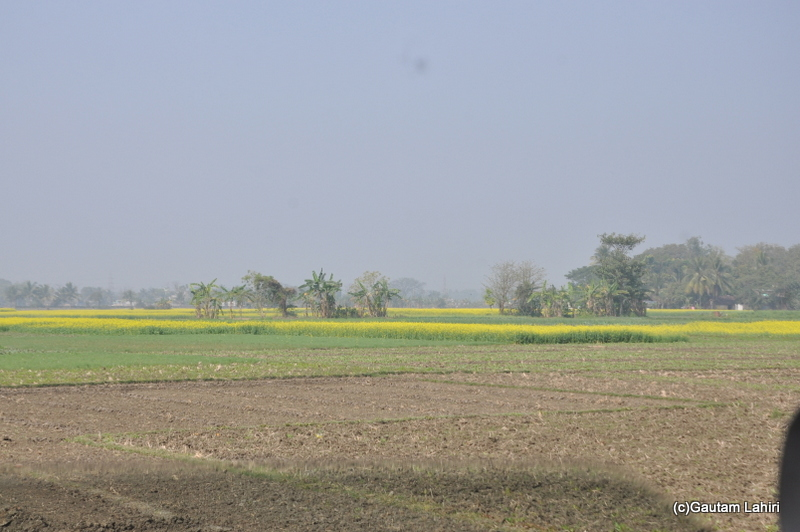 Mustard fields on the road from Kolkata to Chandraketugarh, taken by Gautam Lahiri