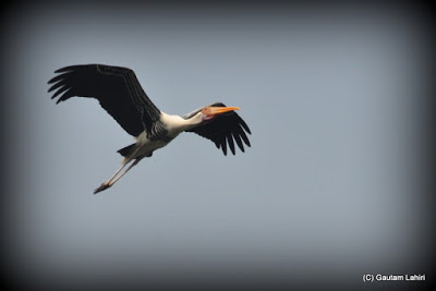 Wings outstretched, a painted stork takes off from the lake over the island in search of food, and so do we as the inviting aroma of a nearby kebab corner beckons us  at Kolkata, West Bengal, India by Gautam Lahiri