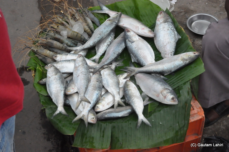 Medium sized Hilsa or Ilish fish with a bunch of prawns on display for the evening strollers at Diamond Harbor, West Bengal, India by Gautam Lahiri