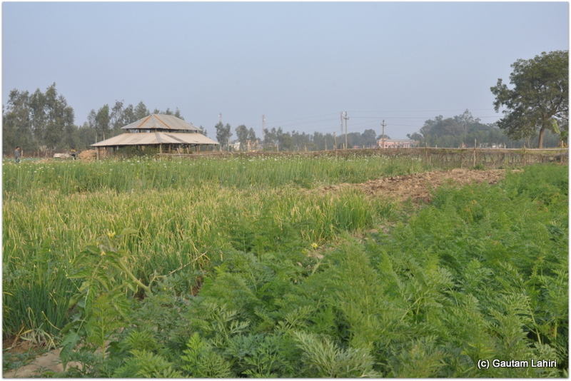Cultivated lands encircled the resort on all its sides at Joypur forest, Bankura by Gautam Lahiri