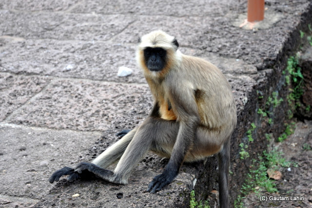 Khandagiri's present inhabitant, very polished and tourist friendly..it will be a good idea to meet them in a group rather alone  at Bhubaneshwar, Odissa, India by Gautam Lahiri