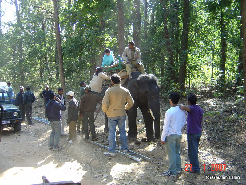 Men, women and children eagerly climb the elephants. Very soon it would be our turn at Kanha forest by Gautam Lahiri