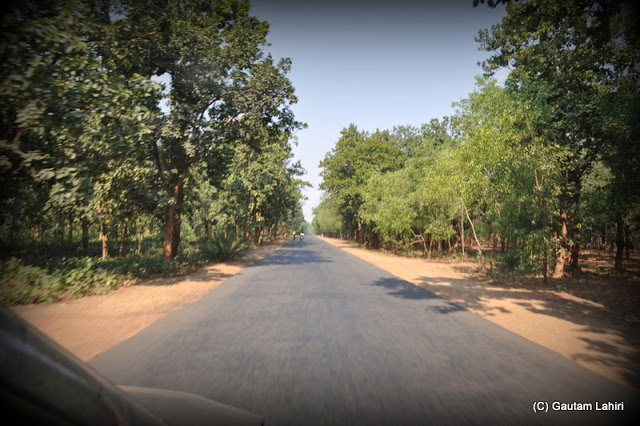 Entering the Sal tree forest at Massanjore, Jharkhand, India by Gautam Lahiri