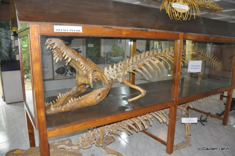 Crocodile breeding center and museum in Bhitarkanika taken by Gautam Lahiri