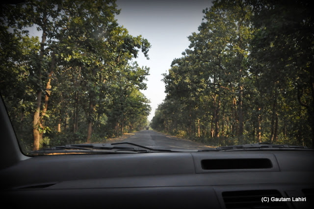 The huge sal trees rushed at speed as our Swift skimmed over the asphalt that furrowed the sprawling forest  at Massanjore, Jharkhand, India by Gautam Lahiri