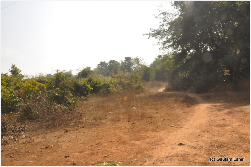 The road disappearing among the trees. We were on our own at Joypur jungle, Bankura by Gautam Lahiri
