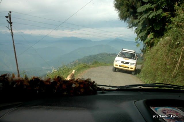 Driving with the utmost care, balancing the car between the death on the left and the car in the opposite direction...quite an interesting moment  at Darjeeling, West Bengal, India by Gautam Lahiri