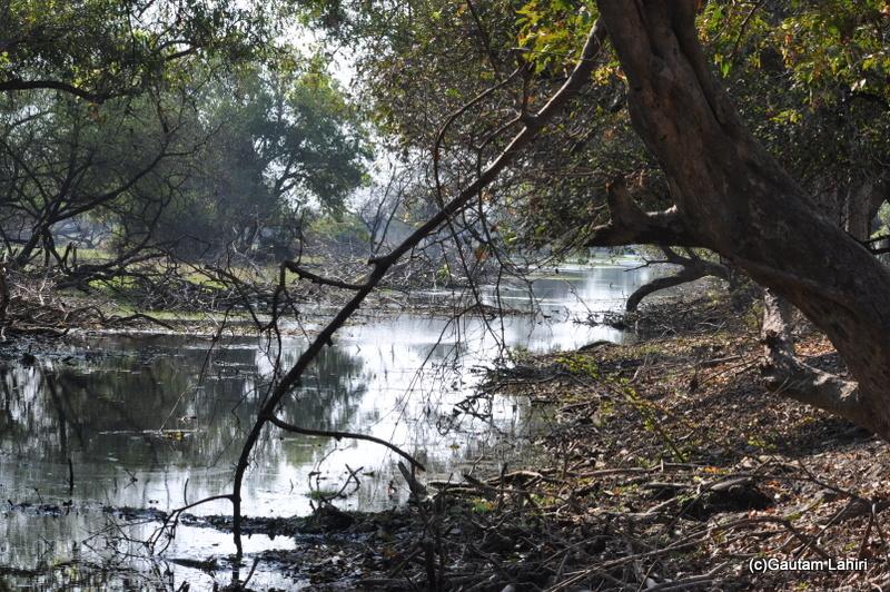 swampy land of Bharatpur sanctuary at Keoladeo Sanctuary, Bharatpur Rajasthan taken by Gautam Lahiri