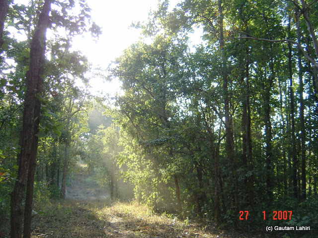 A slice of sunlight through the tree opening lighted up the forest floor. Our anticipation ran as wild as the shades of the color and shadows around at Kanha forest by Gautam Lahiri