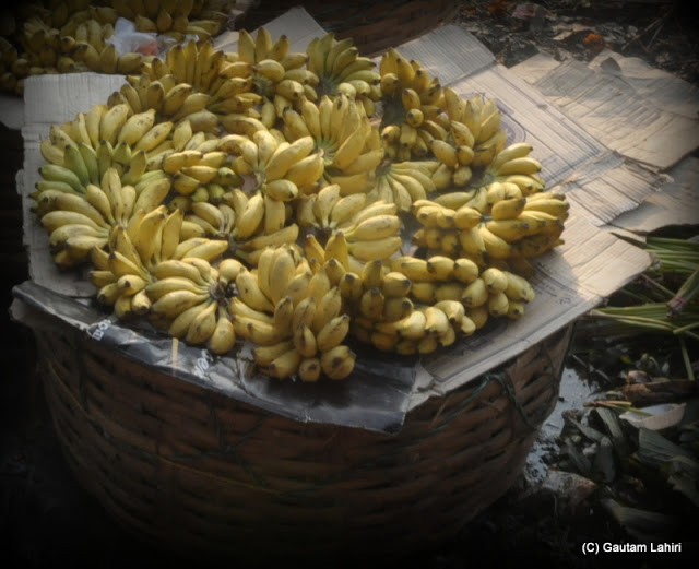 Fresh bananas catching the sun as the bundle sits on a basket... we could not resist and took a bite.. these small bananas found in Calcutta, are very healthy, tasty and filling  at Kolkata, West Bengal, India by Gautam Lahiri