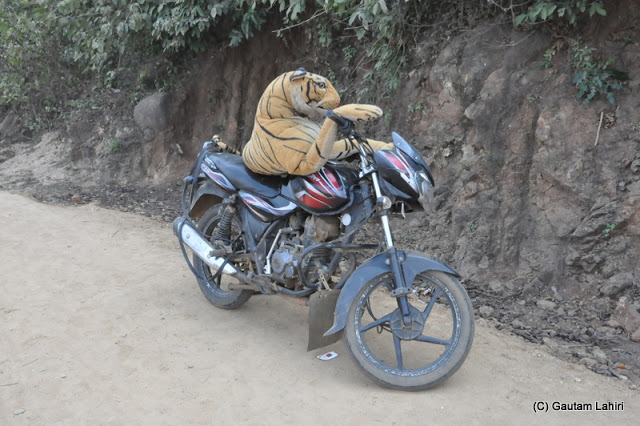 A tiger toy balanced itself on a motor bike caught everyone's attention  at Massanjore, Jharkhand, India by Gautam Lahiri